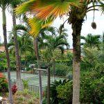EKahi's paddle tennis court